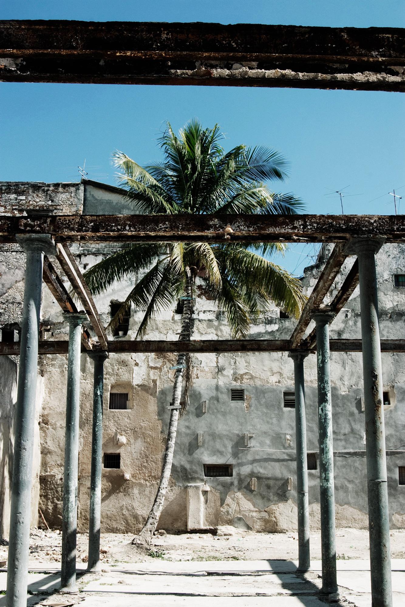 Cuba palmier mur poutres
